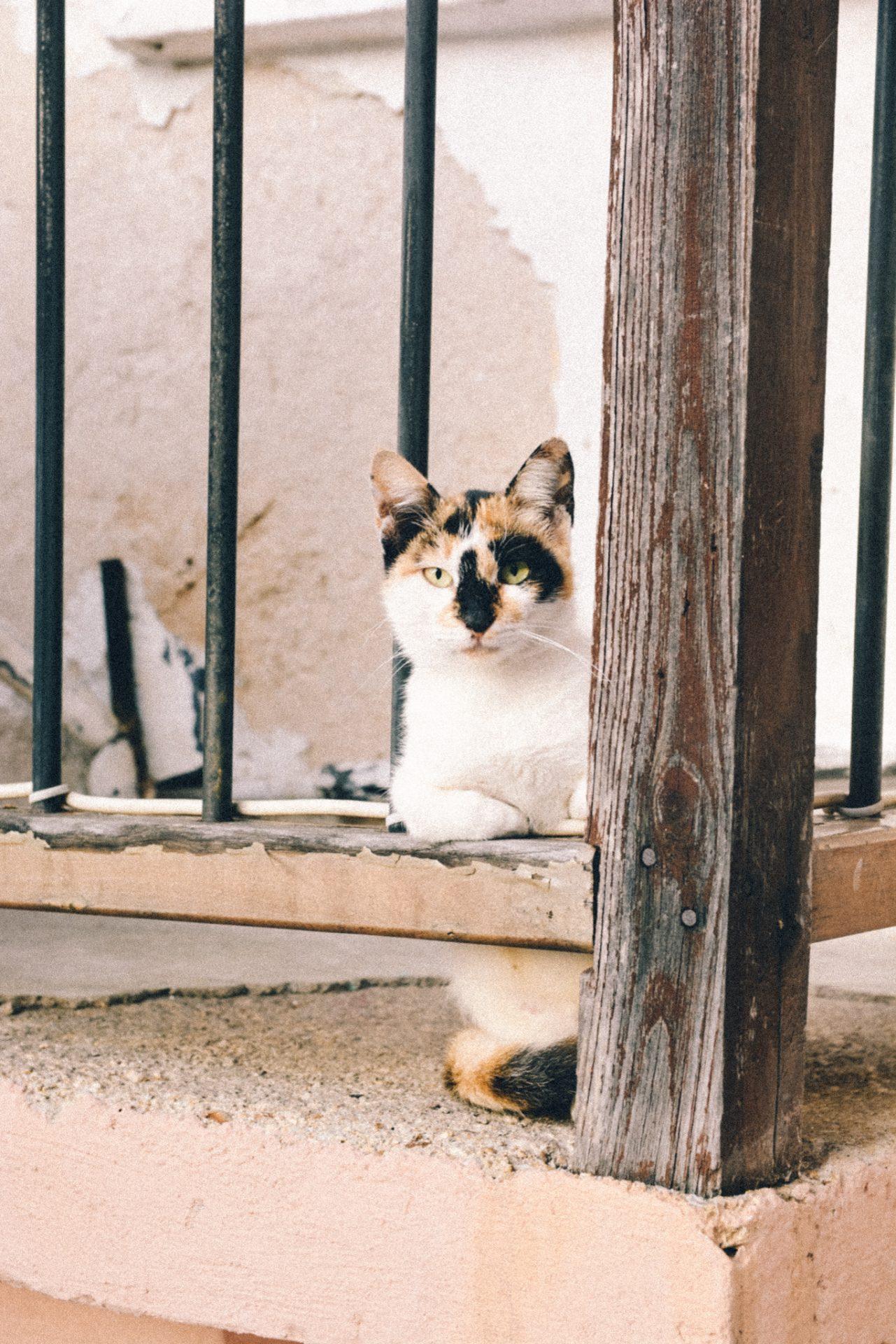 Cat found in traditional Greek village