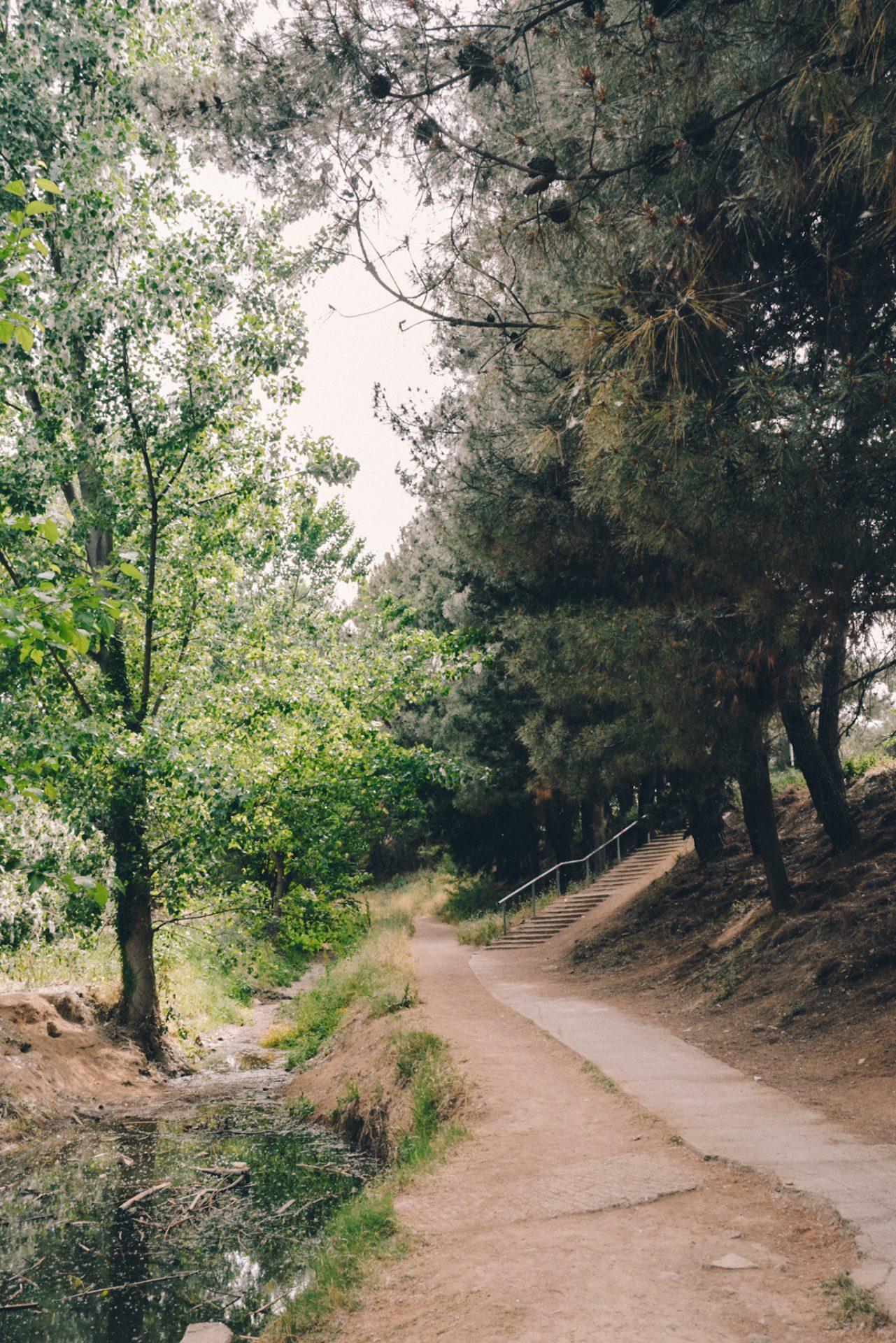 Elaiorema Park